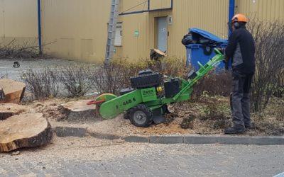 Usuwanie karp drzew